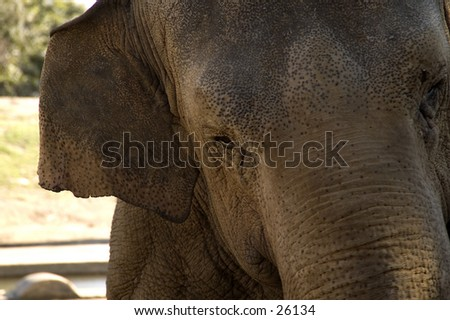 Elephant in Australia - stock photo