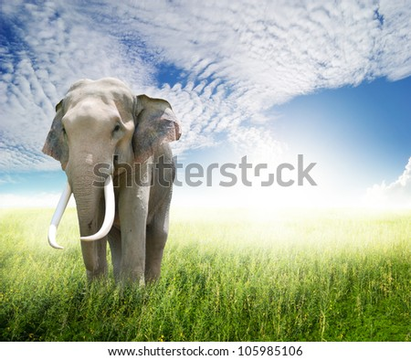 Elephant in green field and sun sky - stock photo