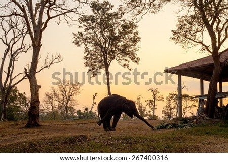 Elephant in India walking in outdoor park  - stock photo