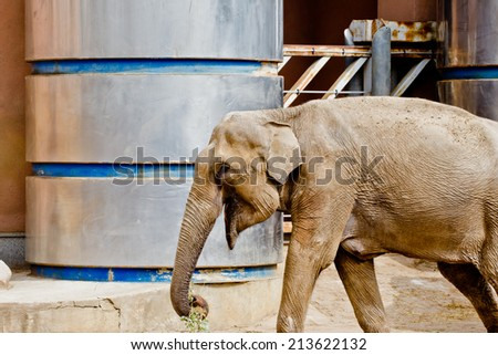 Elephant in Moscow zoo
