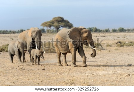 Elephant in National park of Kenya, Africa