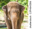 elephant in open zoo, thailand - stock photo