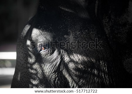 elephant in the shade