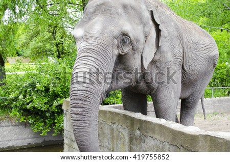 Elephant in the zoo