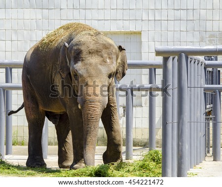 Elephant in the Zoo Park