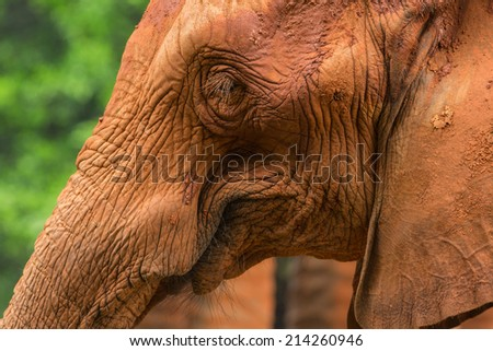 Elephant in zoo - stock photo