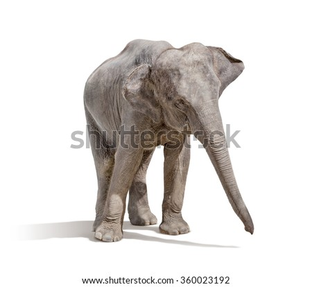 elephant isolated on white background with clipping path - stock photo