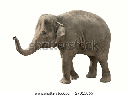 Elephant isolated on white with clipping path