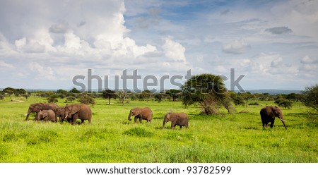 Elephant Landscape on Serengeti Tanzania Africa - stock photo