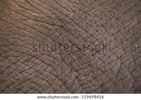 Elephant leather. texture of elephant - stock photo