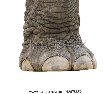 elephant leg isolated - stock photo