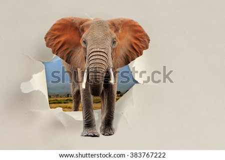 Elephant looking through a hole torn sheet of the paper - stock photo