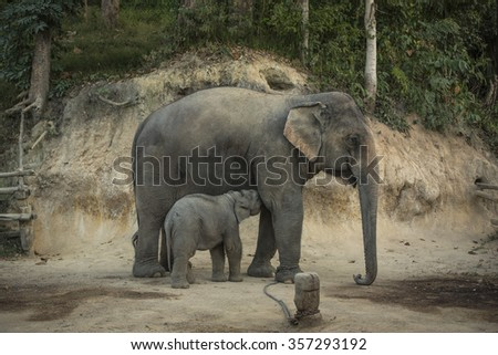 Elephant mother with her baby - stock photo