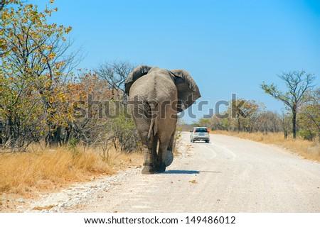 elephant on a gravel road - stock photo