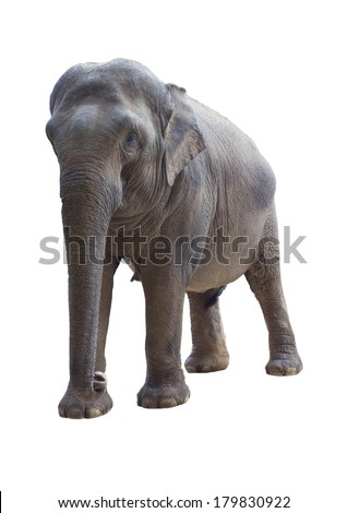 Elephant on a white background