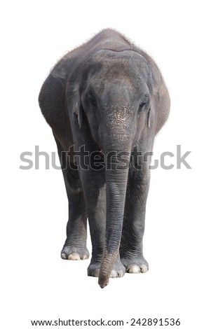Elephant on a white background - stock photo