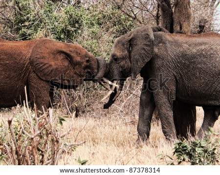 elephant playing - stock photo