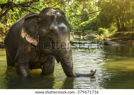 Elephant playing in the river. - stock photo