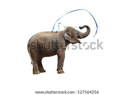 Elephant playing isolated against white background. With Clipping path - stock photo