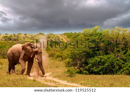Elephant plod, plod, plodding along - stock photo