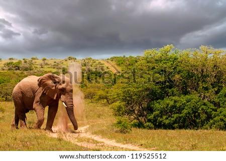 Elephant plod, plod, plodding along - stock photo
