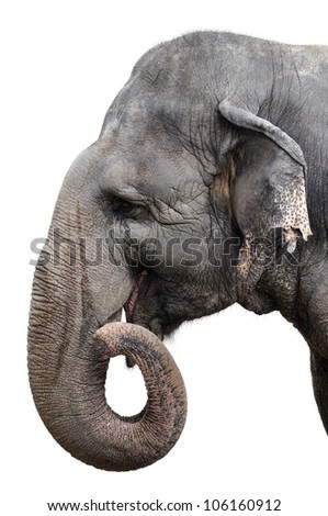Elephant Portrait On White Background - stock photo