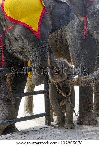 Elephant's family in zoo - stock photo