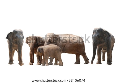 elephant set collection isolated on white background - stock photo