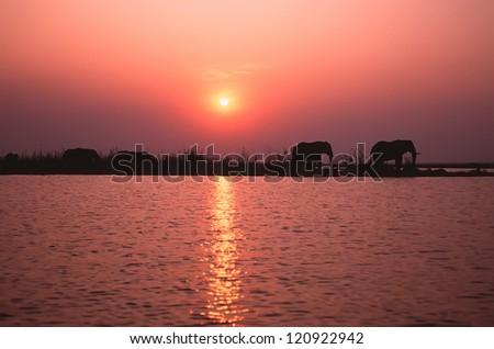 Elephant silhouette. Lake Kariba, Zimbabwe - stock photo
