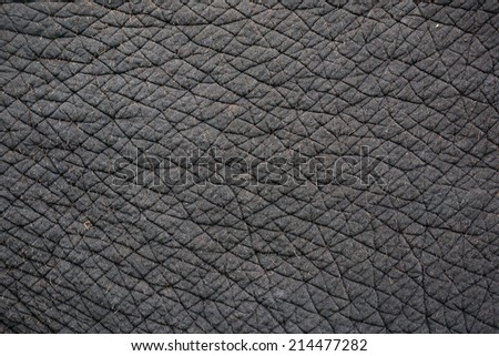 elephant skin for background or texture - stock photo