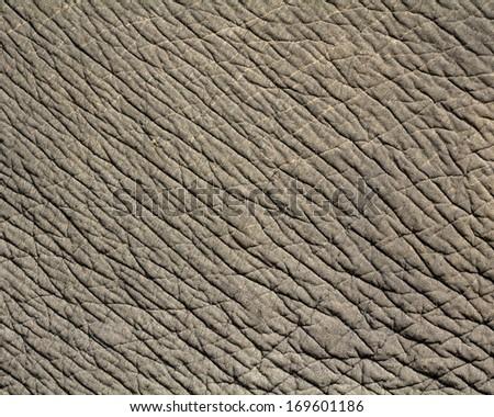 elephant skin texture - stock photo