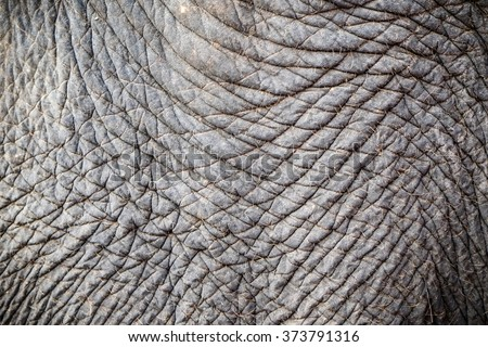 Elephant skin texture abstract background - stock photo