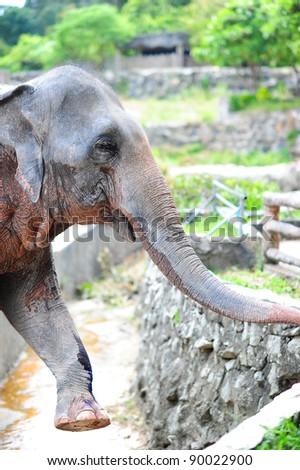 elephant step - stock photo