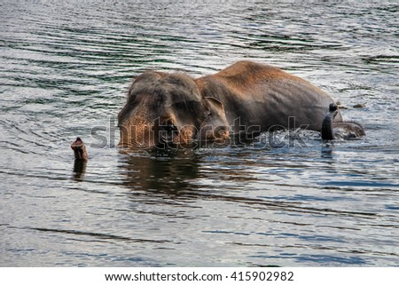elephant swimming with child