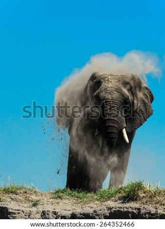 Elephant taking a dust bath - stock photo