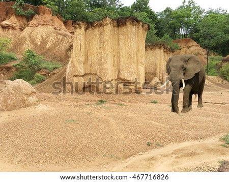 Elephant Walk in the Valley mountain