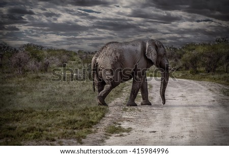 Elephant walking across an African road in Namibia - stock photo