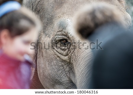 elephant while looking at you after children - stock photo