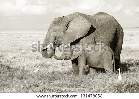 Elephant with baby in Amboseli National Park 05 - stock photo