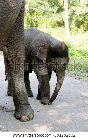 Elephant with baby. Mother and child.