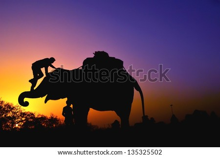 Elephant with people at sunset - stock photo