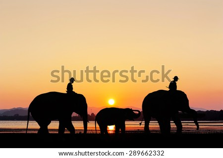 Elephant with sunset at the beach twilight time in Thailand - stock photo