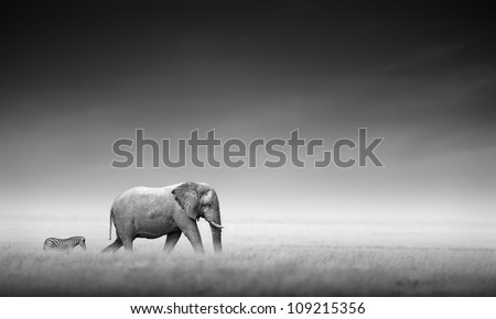 Elephant with zebra behind on open plains of Etosha (Artistic processing) - stock photo