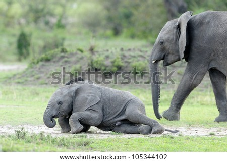 Elephant young playing. - stock photo