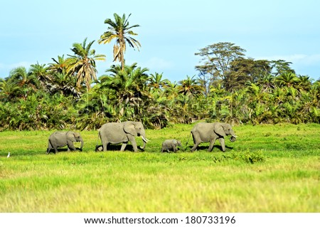 Elephants family on African savanna. Safari in Amboseli - stock photo