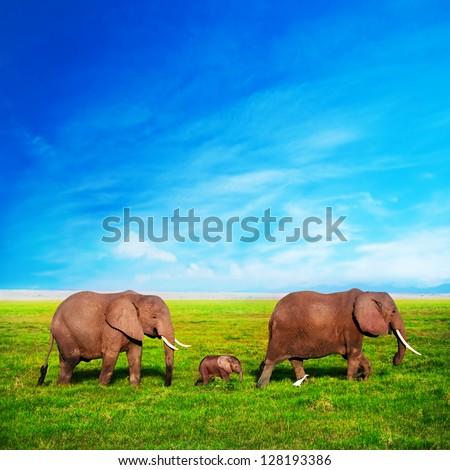 Elephants family on African savanna. Safari in Amboseli, Kenya, Africa - stock photo
