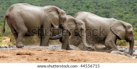 elephants fun and games in watering place - stock photo