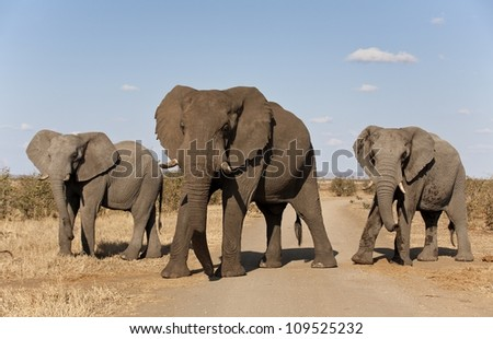 elephants in a group of three across dirt road