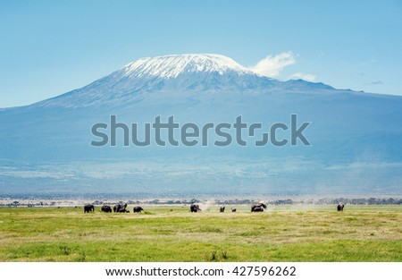 Elephants in Kenya with Kilimanjaro mount in the background, Africa - stock photo