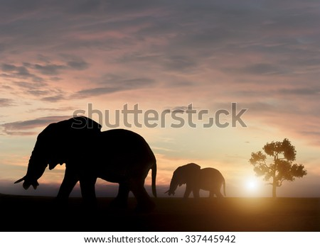 Elephants in sunset - stock photo